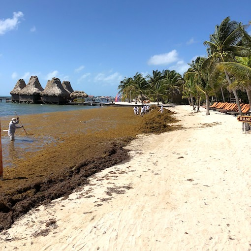 Belize Beaches: The Seagrass Situation In San Pedro: What You Need To Know